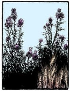 seeds lwjas0277